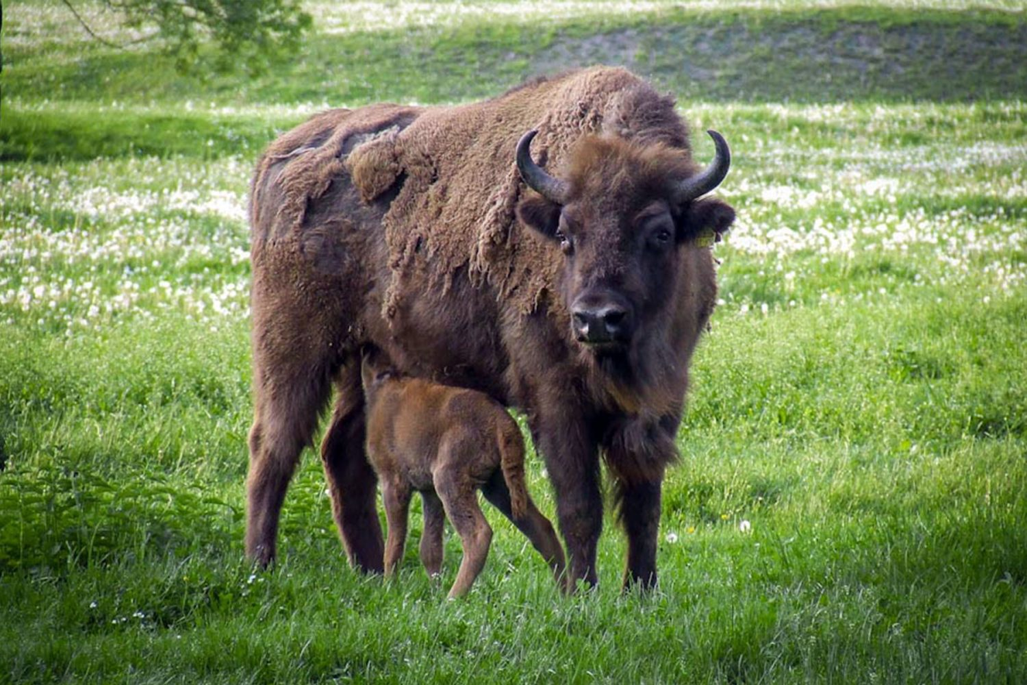 European Bison Reserve